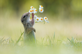 【摄影师Julian Rad】萌鼠来袭:最完美的定格