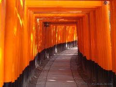 日本神社探秘 千本鸟居