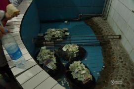 【奇葩帖】郑州动物园巨龟背满人民币 游客令人无奈