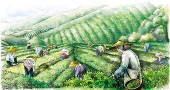 【茶扉社】饮茶知识百问(五)为什么说高山云雾出好茶?