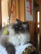 带着我家蠢猫来报道