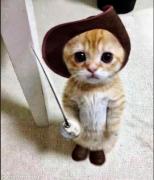【日常小对话 】  나 고양이 한 마리 입양했어. 11月26日