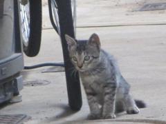 【不会朗读,不会说话で店長の推薦 】猫の魔法瓶