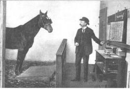 【小故事】聪明的汉斯和冯·奥斯顿