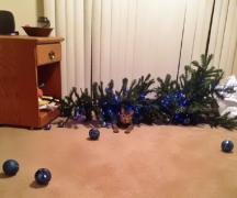 圣诞快乐,喵喵喵