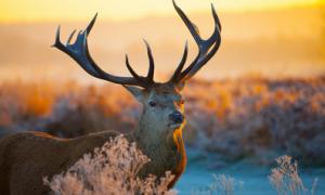 【原版读物分享】圣诞动物分享及相关绘本(含相关资源下载)