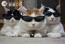小猫咪入侵:老外口语中的猫别有深意