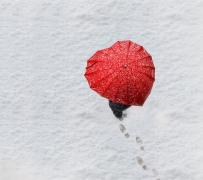 【每日一侃】寒冬物语:你那里下雪了吗?