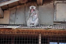 「每週一拍」猴年吉祥