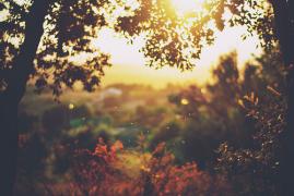【ACG问答】第25期——夏末的黄昏