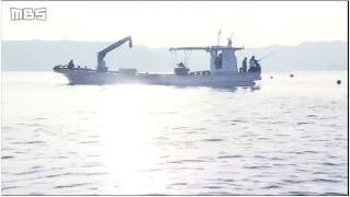 【MBS新闻】鳴門海峡 鯛網漁が最盛期