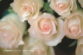 2016.07.21【英译中】The Secret Garden秘密花园·17